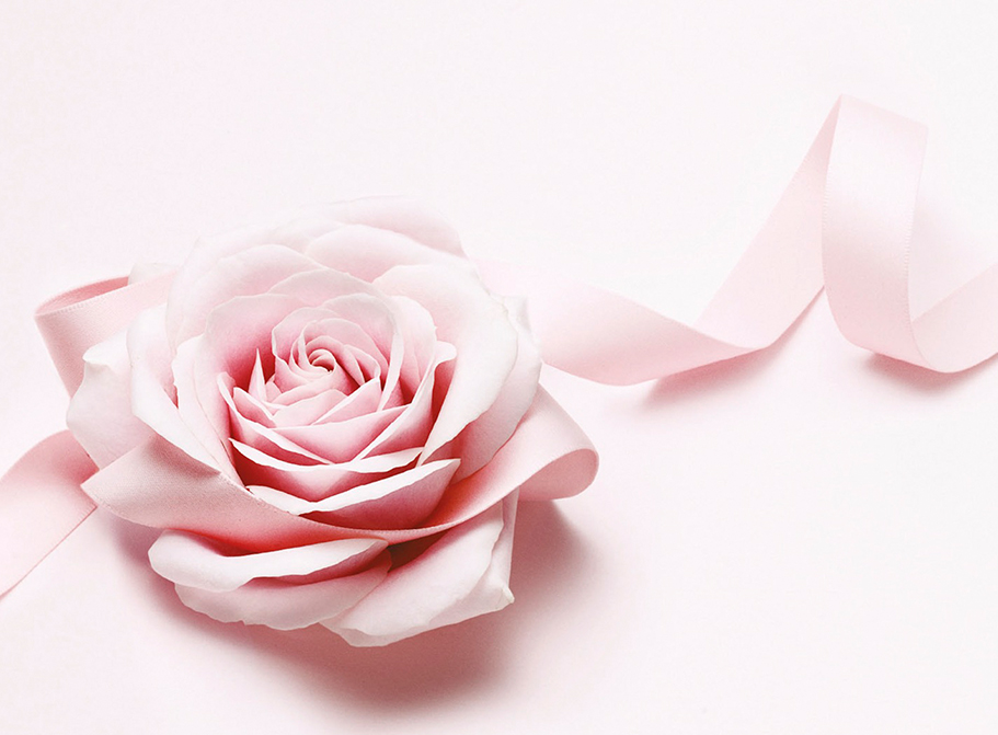 rose sur fond avec ruban